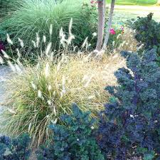 ornamental grasses you should get to know u2014 the family handyman