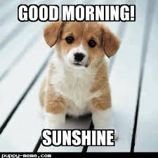Good Morning Sunshine Meme - 1429015837972 png