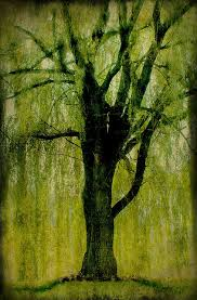 70 best mr willow tree images on weeping willow