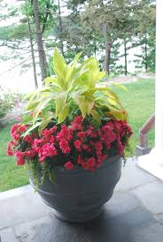 Pictures Of Garden Flowers by Planting The Annual Flowers Dirt Simple