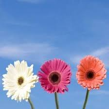 Free Shipping Flowers 40 Best Birthday Flowers Images On Pinterest Cut Flowers Fresh