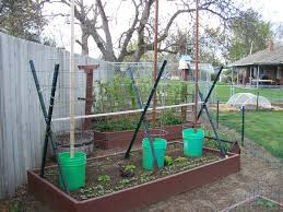 annie u0027s kitchen garden april 19 2011 the tomato fortress
