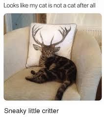 Sneaky Cat Meme - 25 best memes about sanrio sanrio memes