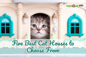 how to get rid of worms in cats at your home pawsome talk