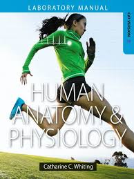Visual Anatomy And Physiology Pdf Human Anatomy Physiology Lab Manual Cat Ver Pdf Human Body Lip