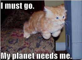 Stupid Cat Meme - planet stupid ree the bee
