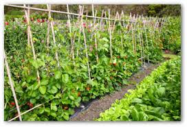 big backyard vegetable garden decorating clear
