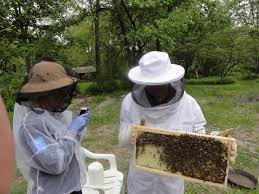 Harvesting Honey From A Top Bar Hive Top Bar Hive