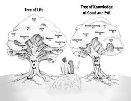 tree of and tree of knowledge of and evil gerald flurry