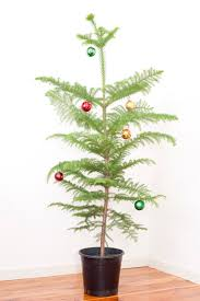 Potted Christmas Trees For Sale by Photo Of Simple Christmas Tree Free Christmas Images