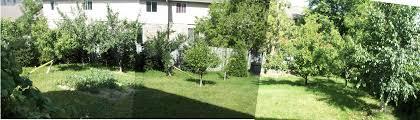 backyard fruit trees southern california backyard and yard