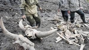 meet yuka age 39 000 preserved mammoth