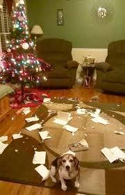 Cat Climbing Christmas Tree Video 241 Best Christmas Animals Images On Pinterest Christmas Animals