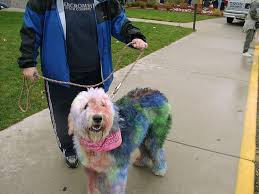 5 diy dog hair dye methods using food color good to know before