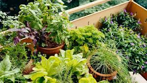 how to start preparing your veggie garden tips from a certified