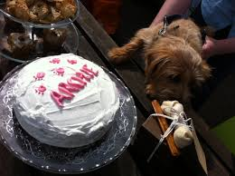 quick and easy dog birthday cake recipes for your dog u0027s party