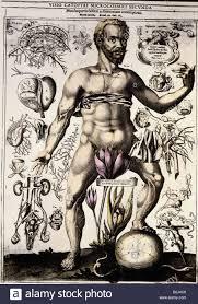 Human Anatomy Male Medicine Anatomy Male Body Copper Engraving By J Remmelin