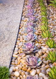 Low Light Succulents by 8 Elements To Include When Designing Your Zen Garden Succulents