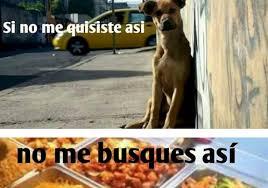 Memes De Chihuahua - salen los memes del perro congelado en restaurante chino tiempo