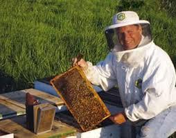 Backyard Beehive Natural Beekeeping In Your Backyard Homesteading And Livestock