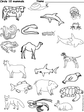 mammals coloring pages mammals or not u2013 science printable for kindergarten on mammals