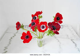 Vase With Red Poppies Vase With Poppies Stock Photos U0026 Vase With Poppies Stock Images
