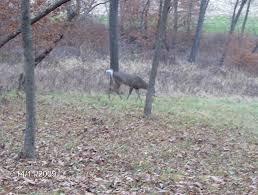 4x4 Elevators Deer Blind Hunting Blinds