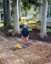 martha u0027s daffodil planting plan martha stewart