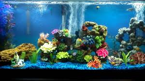 Live Plants In Community Aquariums by 55 Gallon Freshwater Community Aquarium 30 Fish Youtube