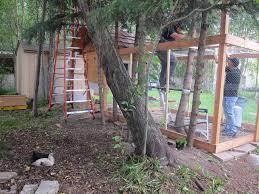 building a backyard chicken coop diy urban coop part 3