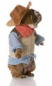 halloween animal costume ideas 51 best dog halloween costumes images on pinterest animals pet