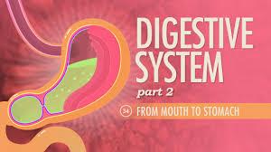 digestive system part 2 crash course a u0026p 34 youtube