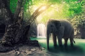 The Blind Men And The Elephant Analysis Naisha Ahsian Crystal F A Q S