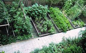 Small Vegetable Garden Ideas Pictures Small Vegetable Garden Ideas Area Outdoor Furniture Small