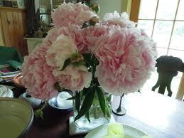 Pink Peonies Nursery June 2014 Fernwood Nursery U0026 Gardens
