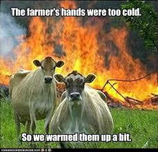 Overkill Meme - animal memes evil cows maybe a bit overkill i can has cheezburger