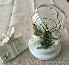 Indoor Garden Decor - blown glass cover miniature landscape air plant indoor garden