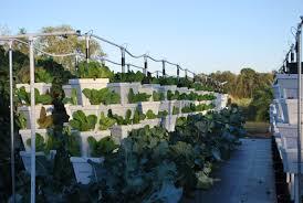 commercial hydroponics backyard food solutionsbackyard food