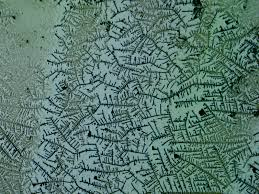 ferning pattern in spanish what i learned today crystal gazing with the microscope