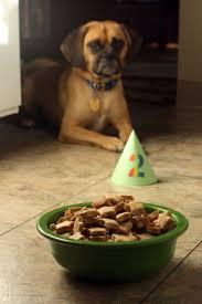 11 best for lisa carolina dog thai ridgeback images on