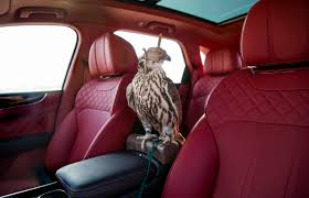 bentley car bentley falcon suv for luxury car birding time