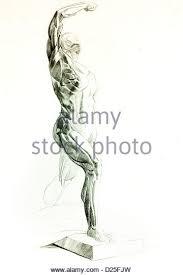 human body muscles pencil drawing stock photos u0026 human body