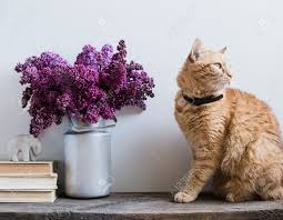 home interior decor bouquet of lilacs in a vase books and ginger