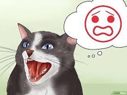 imagenes para mi novio bravo cómo calmar a un gato enojado 18 pasos con fotos