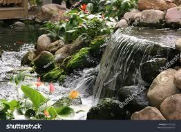 tropical indoor water garden stock photo 1056225 shutterstock