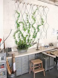 plantes cuisine plante interieur ombre pour pot suspendu cuisine beau mes plantes