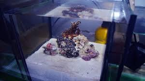 membuat filter aquarium kecil cara membuat filter alami untuk akuarium air laut youtube