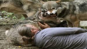 Seeking 1 Sezon 2 Bã Lã M Many Wolf Attack Human And Other Animals Vdo Amazing