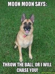 Moon Moon Memes - moon moon says throw the ball or i will chase you make a meme