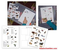 free printable worksheets vertebrates invertebrates animals and their characteristics free worksheet homeschool den